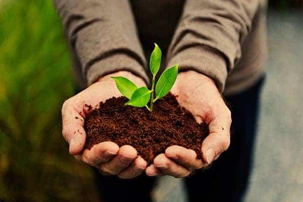 φυτά δέντρα