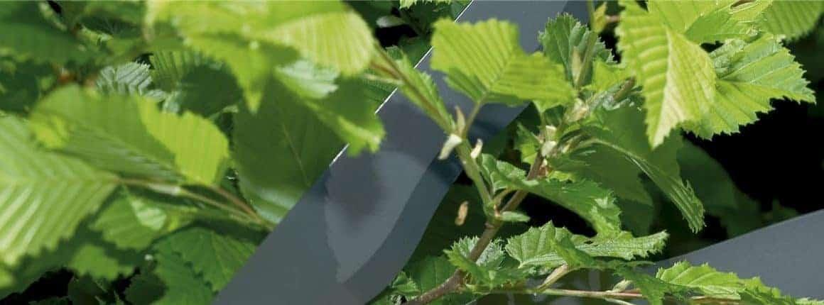 Σωστή φροντίδα των θάμνων στους φράχτες του κήπου σας